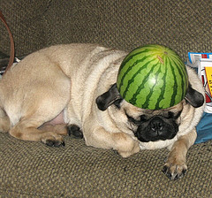 watermelon for dogs